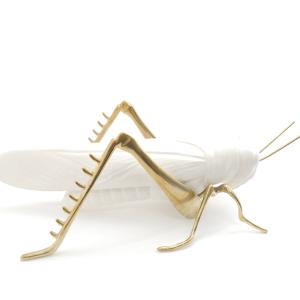 White grasshopper
